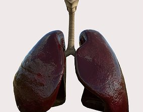 Lungs Respiratory System 3D model