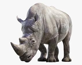 3D model Big White Rhino Rigged