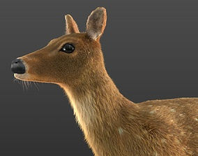3D model Chital Deer Rigged Hairs