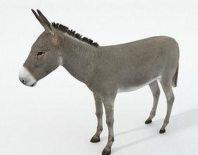 Donkey 3D asset