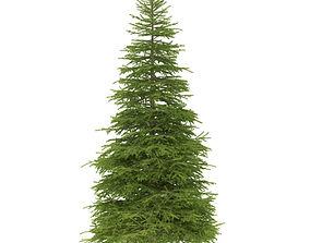 3D model Spruce height 9 metre