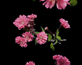 3D Japanese Cherry Blossom - Branch for Particle