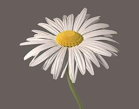 Daisy Flower blooming 3D model