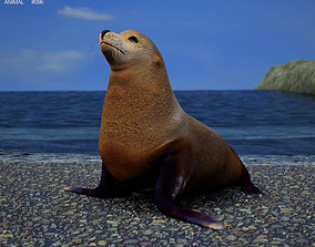 3D model Brown Fur Seal Arctocephalus Pusillus