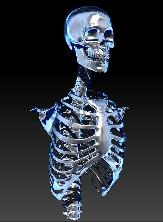 Skeleton For Pendent And Medical Research For  3D Printing