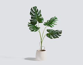 3D Monstera Plant