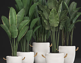 Exotic plants banana tree set 435 3D