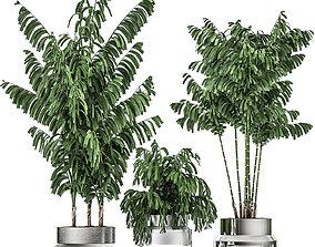 3D Decorative palm Chamaedorea in a chrome flowerpot 796