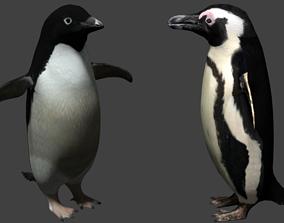 Penguin 3D asset
