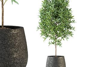 Plants collection 285 3D model