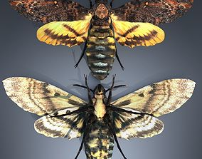 3D Acherontia Atropos Death Head Hawk Moth PBR