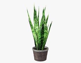 Potted plant decorative 02 3D model