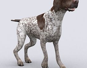 animated 3DRT - German shorthaired pointer