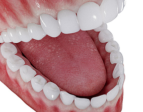 3D Photorealistic mouth gums and teeth
