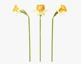 3D Narcissus flower single yellow plant