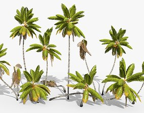 Coconut Palm Trees Asset 1 3D model animated