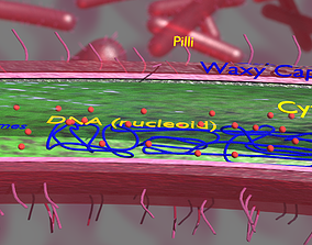 3D Tuberculosis bacteria detail cut section labelled