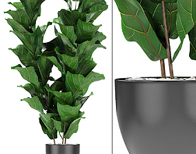 3D model decorative Plant in Pot Flowerpot Exotic Plant
