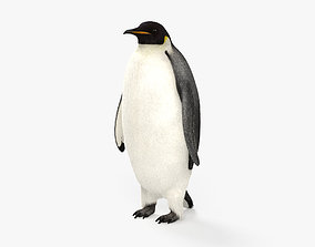 Emperor Penguin HD 3D
