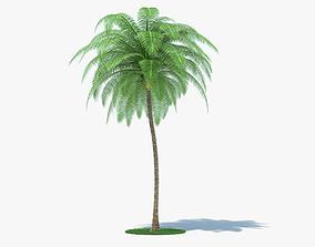 cocoanut 3D model Coconut Palm