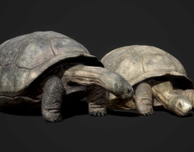 Galapagos Tortoise 3D model animated