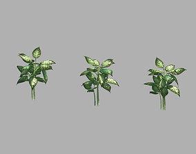 Plant - Diffenbachia 3D model