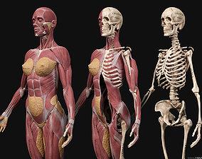 Female Anatomy Kit 3D model
