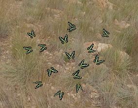 3D asset animated butterflies animation