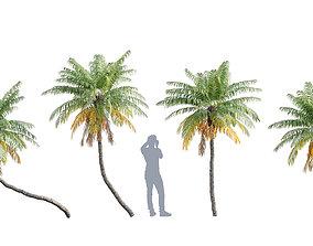 3D Phoenix roebelenii - Pygmy Date Palm - 01