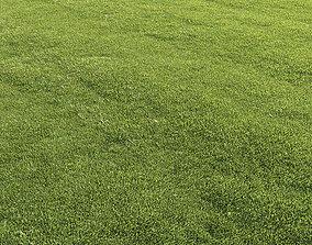 3D model Lawn grass summer