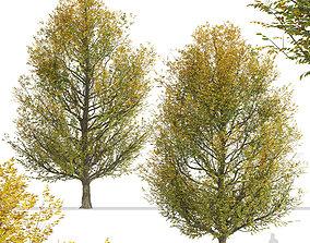 Set of European hornbeam or Carpinus betulus 3D model 3