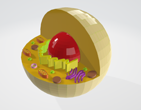3D print model Animall Cell