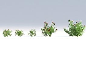 3D model rose bush