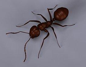 3D Ant model