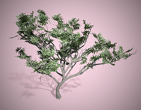 3D model HookThorn Blossoms Flowers Tree