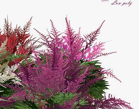 3D asset Flower Astilbe