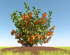 Guince japonica bush with flowers and fruits 3D model
