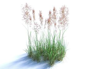 3D model Bent Grass Agrostis Capillaris