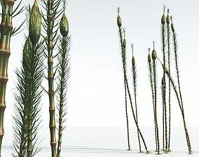 EVERYPlant Suckows Horsetail Tree 02 --16