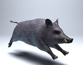 3D asset Wild boar