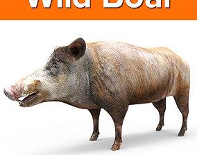 game-ready wild 3D Wild Boar 3D Model