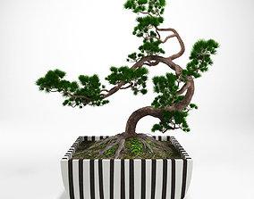 3D Pine bonsai