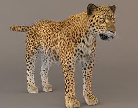 Leopard Fur model 3D