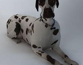 house dog 3d model