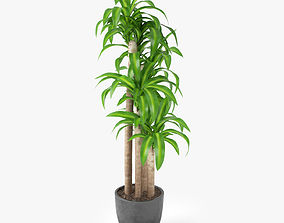 3D model Dracaena Massangeana Potted Plant