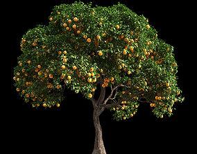 3D model Orange Tree 4