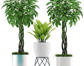 3D Plants 85