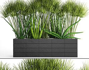 Tropical plants in flowerpot 3D