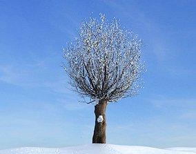 3D Winter Bare Tree