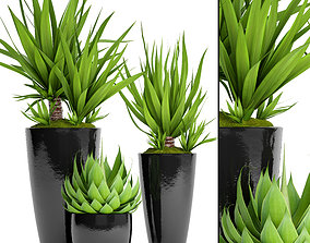 3D Potted plants Yucca and Agava